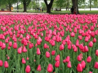Ottawa Spring Copyright Shelagh Donnelly
