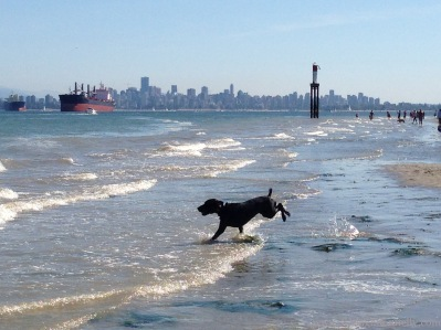 Spanish Banks Pooch Copyright Shelagh Donnelly