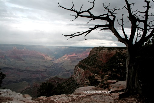 Grand Canyon 3824 Copyright Shelagh Donnelly