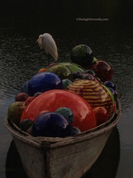 Bird in Boat 4980 Copyright Shelagh Donnelly
