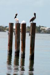 Birds of a Feather_2916 Key Largo Copyright Shelagh Donnelly