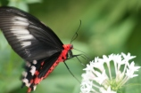 Butterfly 3644 Copyright Shelagh Donnelly