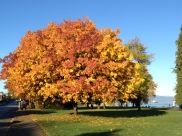 Kits Beach Fall Foliage 2013-2