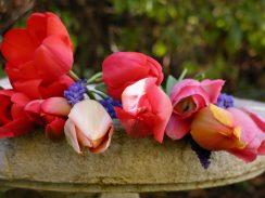 P1010360 Tulips on Sarsons Birdbath