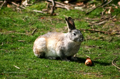 Rabbit 4594 Copyright Shelagh Donnelly