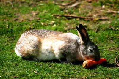 Rabbit 4595 Copyright Shelagh Donnelly