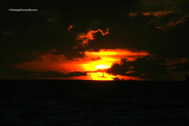 South Beach Sunrise 4044 Copyright Shelagh Donnelly