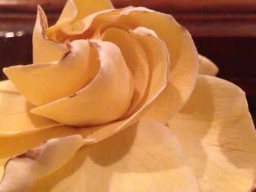 Gardenia 7721 Copyright Shelagh Donnelly