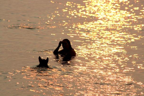 Spanish Banks Sunset Swim 5300 Copyright Shelagh Donnelly