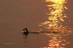 Spanish Banks Sunset Swim 5380 Copyright Shelagh Donnelly