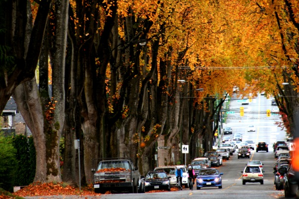 12th Ave in Fall 15-7823 Copyright Shelagh Donnelly