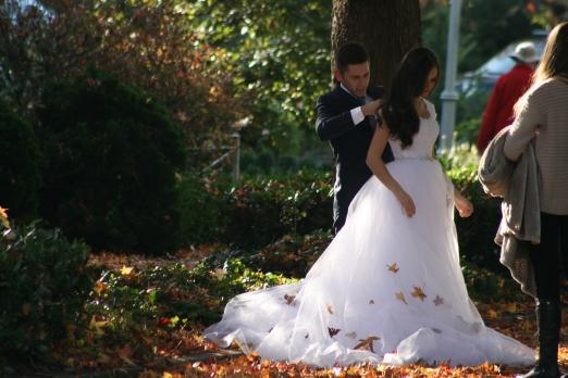 Fall Wedding 7794 Copyright Shelagh Donnelly