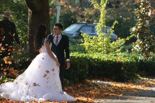 Fall Wedding 7792 Copyright Shelagh Donnelly