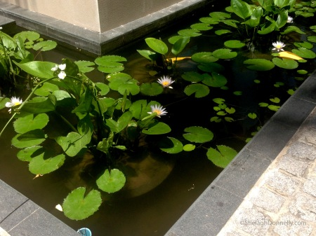 Water Garden Phuket Copyright Shelagh Donnelly