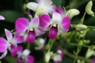 Singapore Botanic Gardens 9120 Copyright Shelagh Donnelly