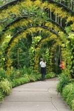 Singapore Botanic Gardens 9183 Copyright Shelagh Donnelly
