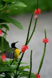 Singapore Botanical Garden Bird 9031 Copyrigh Shelagh Donnelly