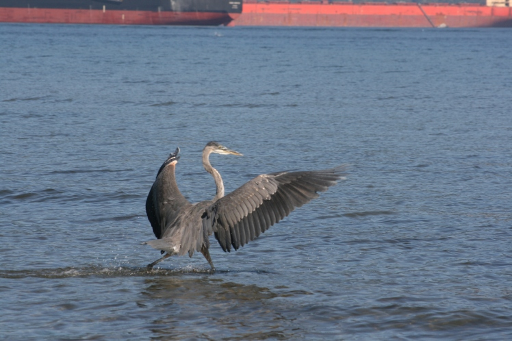 Heron and Ship 0668 Vancouver Copyright Shelagh Donnelly
