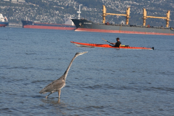 Heron, Kayak and Ships - Vancouver 0670 Copyright Shelagh Donnelly