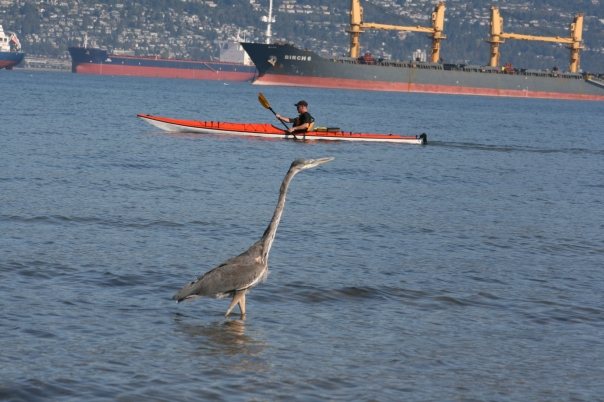 Heron, Kayak and Ships - Vancouver 0671 Copyright Shelagh Donnelly