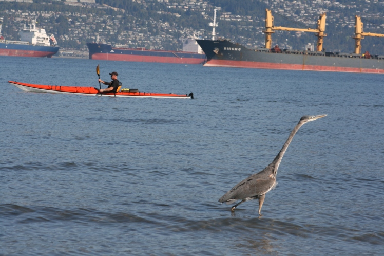 Heron, Kayak and Ships - Vancouver 0672 Copyright Shelagh Donnelly