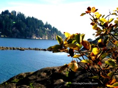 Whytecliff Foilage Copyright Shelagh Donnelly