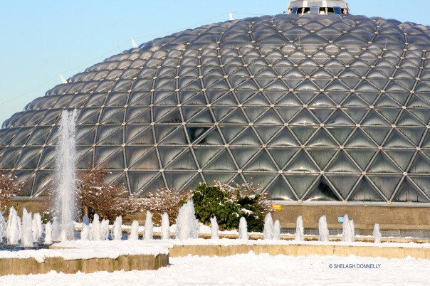 bloedel-conservatory-2420-copyright-shelagh-donnelly