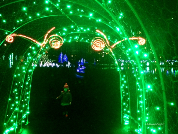 christmas-lights-at-lafarge-lake-7724-copyright-shelagh-donnelly