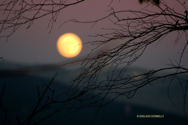 full-moon-rising-2948-copyright-shelagh-donnelly
