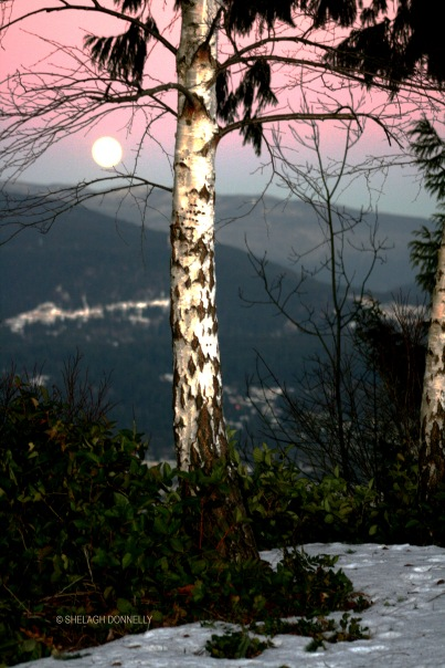 full-moon-rising-2949-copyright-shelagh-donnelly