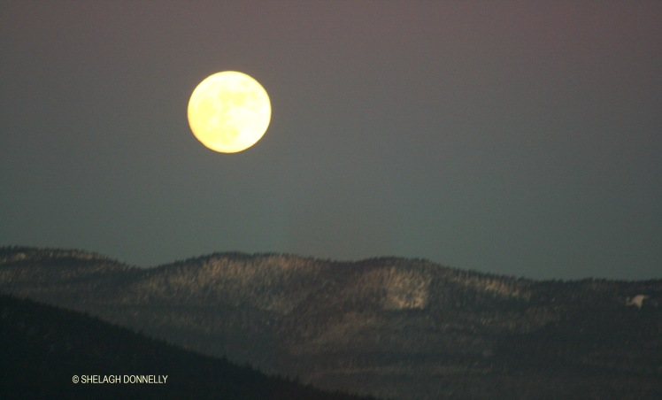 full-moon-rising-2958-copyright-shelagh-donnelly
