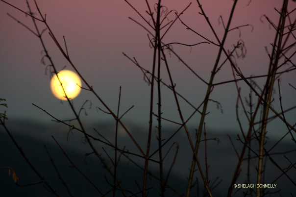moon-through-twigs-2955-copyright-shelagh-donnelly