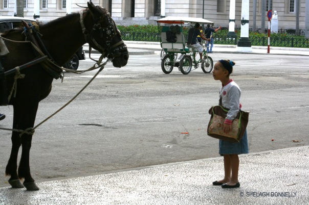 Havana Girl and Horse 17-3803 Copyright Shelagh Donnelly