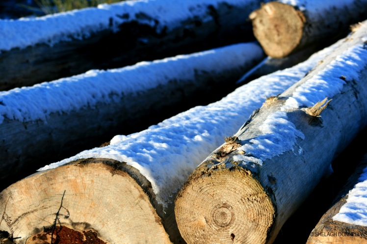 snow-on-logs-spanish-banks-17-2832-copyright-shelagh-donnelly